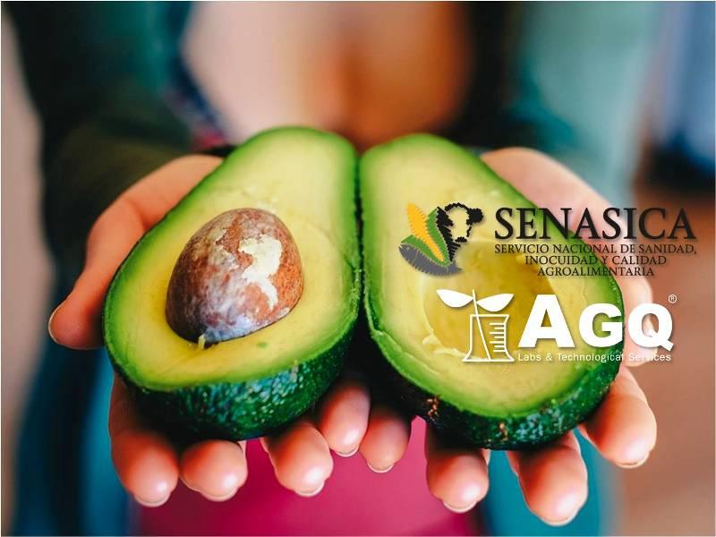 AGQ Labs autorizado por SENASICA en análisis de aguacate