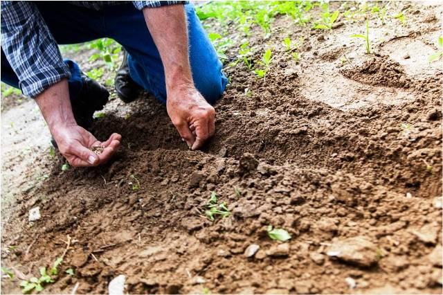 Análisis de suelos agrícolas y porqué hacerlos