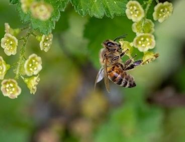 Biodiversidad, Día Mundial del Medio Ambiente