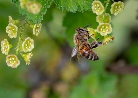 Biodiversidad Dia Mundial del Medio Ambiente