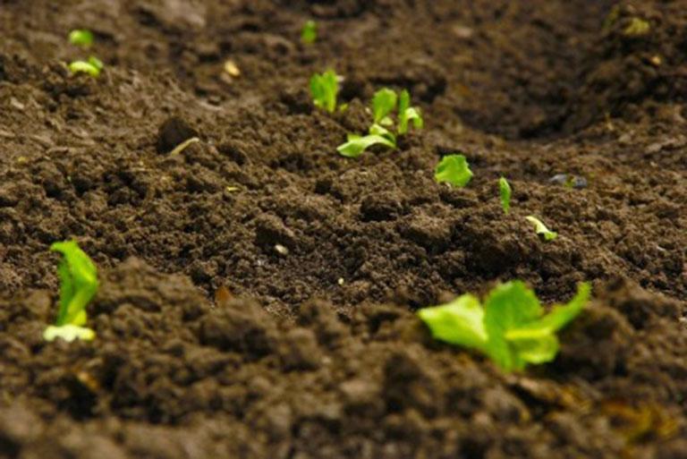 análisis de suelos agrícolas